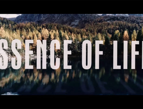 V94 / DEVI REED – Essence Of Life
